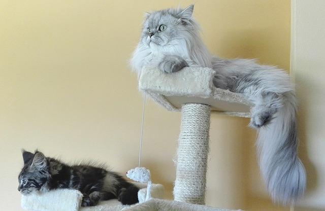 kočky na odpočívadle