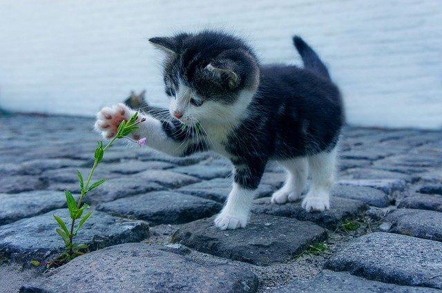 kotě u kytky
