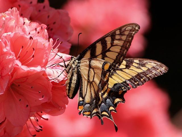 krásný motýl na květině