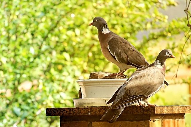 holubi na zídce