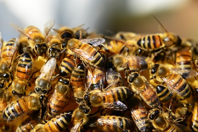 roj včel